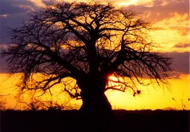 africa-una-puesta-de-sol_2758833